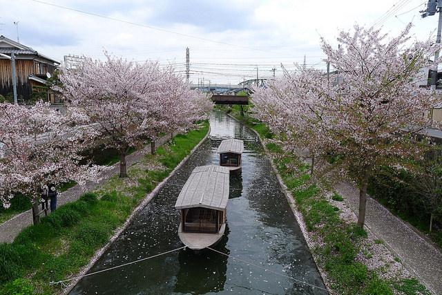 春の伏見散歩〈伏見帖〉